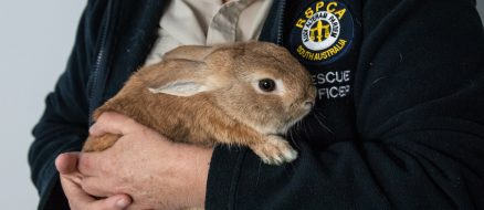 Bunny Mistaken for Bomb In Airport - Causes Havoc