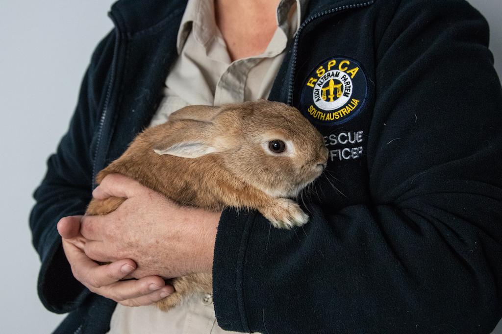 bunny bomb australia