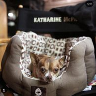 Katharine McPhee's pet Larry