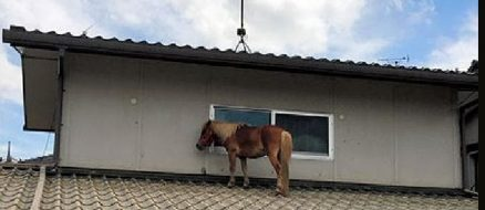 Missing Mini Horse Found On Roof In Japan
