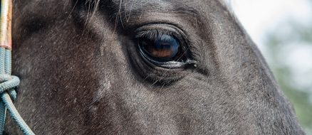 Abused Horse Sues Ex-Owner for $100,000