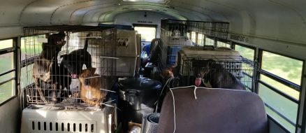 Trucker Rescues 64 Shelter Animals from Hurricane Florence In Old School Bus