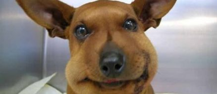 Dog VS Bee: Sixteen Dogs Who Learned a Ruff Lesson
