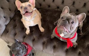 Megan-Thee-Stallion-4oe and Dos French Bulldogs