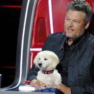 Blake Shelton's pet Betty