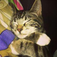 Dave Grohl's pet Bengal Cat